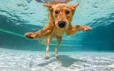 Hundebadetag mit Unterwasser Fotoshooting